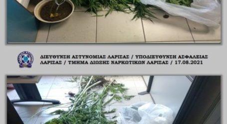 Ανακάλυψαν φυτεία με πάνω από 100 δεντράκια χασίς σε αυλή στο Κιλελέρ (φώτο)