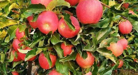 Αγροτικός Συνεταιρισμός Ζαγοράς Πηλίου: Τα μήλα ZAGORIN, έρχονται με το Φθινόπωρο!