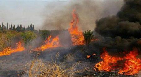 Φωτιά στην Ν. Αγχίαλο έκαψε πέντε στρέμματα