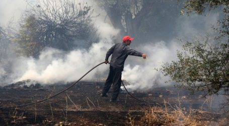 Φωτιά στο Αερινό – Κάηκαν έντεκα στρέμματα