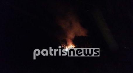 Φωτιά στην Ηράκλεια Ηλείας – Καίγεται αλσύλλιο δίπλα σε κατοικημένη περιοχή