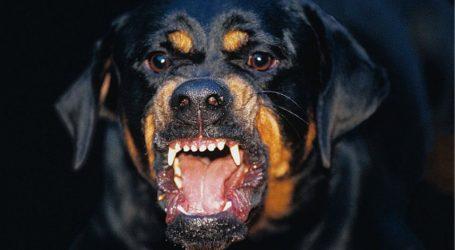 Βόλος: Καταδίκη για 29χρονη ιδιοκτήτρια σκύλου – Κρίθηκε ένοχη για τη σωματική βλάβη 15χρονου