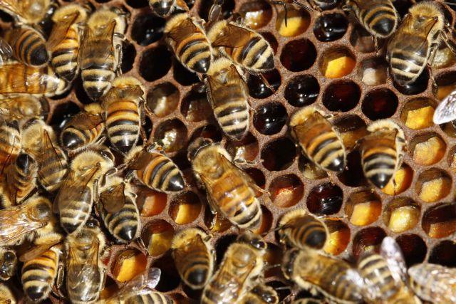BeesSlovenia5