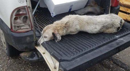 Επιτέλους βρέθηκε λύση για τον τραυματισμένο και χιλιοταλαιπωρημένο σκυλάκο από το Μεσοχώρι (φωτο)