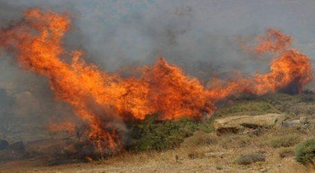 Ριζόμυλος: Φωτιά ξέσπασε σε χωράφι